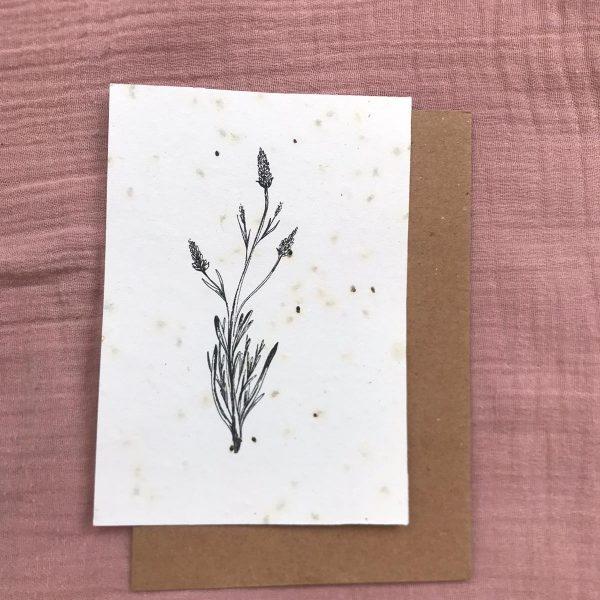 groeikaart lavende