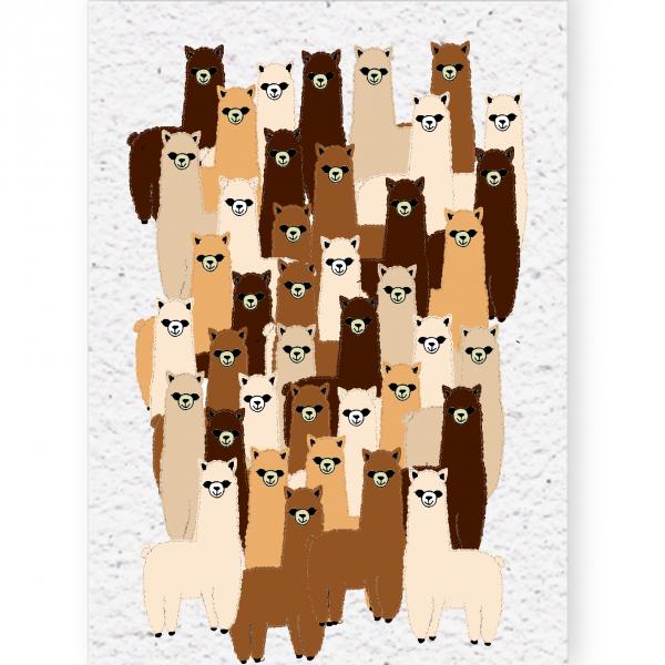 groeikaart alpacca's
